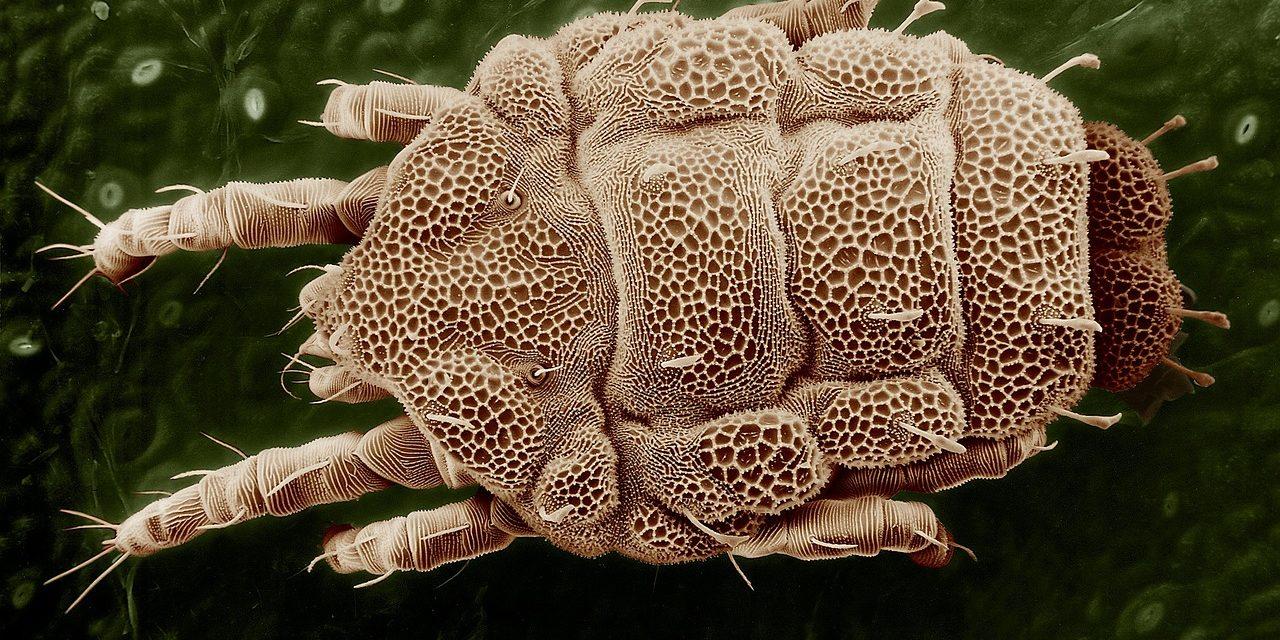 Allergie aux acariens : Causes, symptômes et traitements