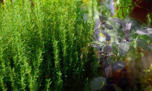 Comment perdre du poids en consommant des plantes