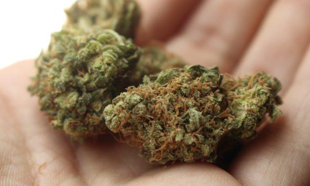 Cannabis : Le Conseil d'Analyse Économique recommande sa légalisation